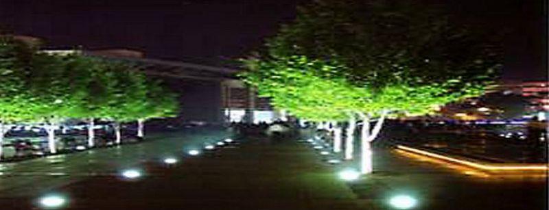 """为植物选择景观照明要""""讲究""""雷州"""